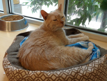 Help the residents of Harmony House for Cats!