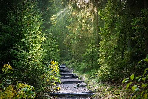 forest-2942477_1920.jpg