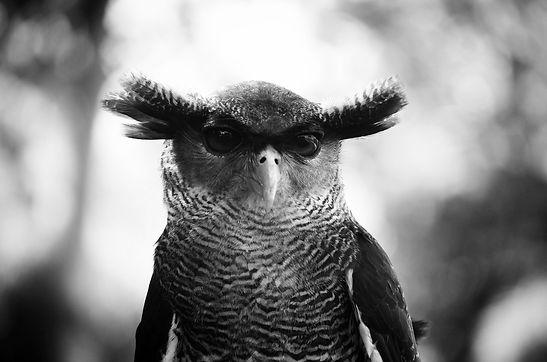 owl-1019062_1920_edited.jpg