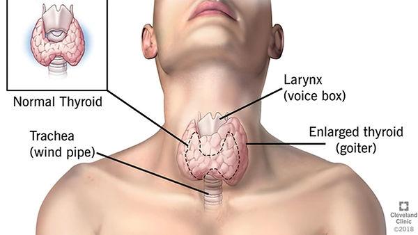 thyroid-vid.jpg
