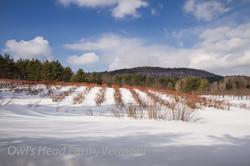 Bluebird sky in winter