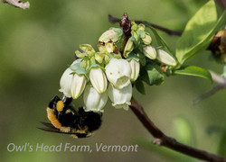 The bees stay busy at the Farm