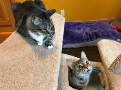 Sassy & Miss Kitty
