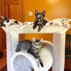 Laredo, Desi, Chelsea and Lilly 2015.JPG