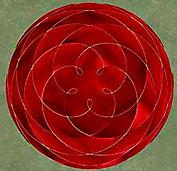 red venus rose 2.jpg