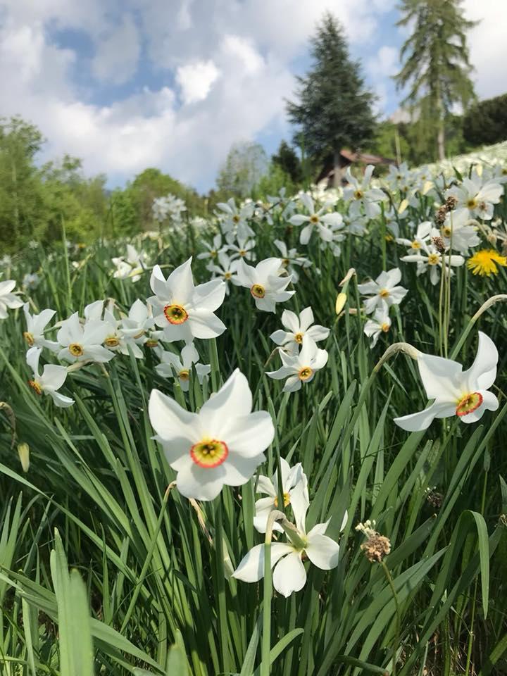 Narcisses et fleurs 2018