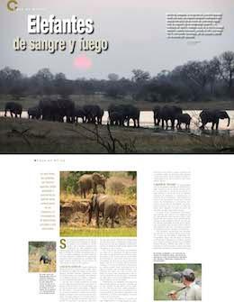 http://www.custombigfive.com/images/prensa/portada_elefantes_sangreyfuego.jpg