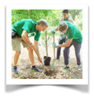 Planting_tree.png