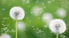 Why Do We Get Allergies And Is There a Natural Way To Make Them Go Away?