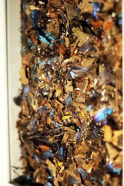 papillons2-2.JPG