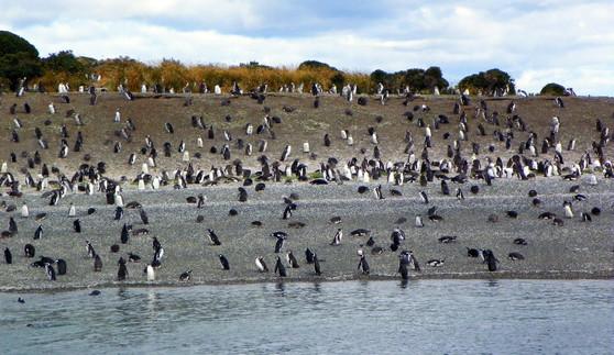 Ushuaia, Martial island