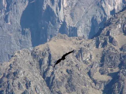 Vale del Colca. El Condor