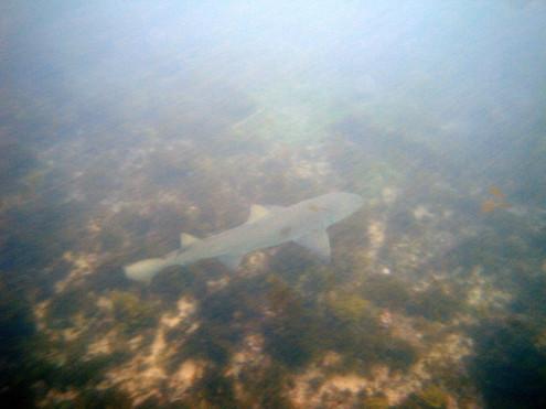 Tubarão Sueste