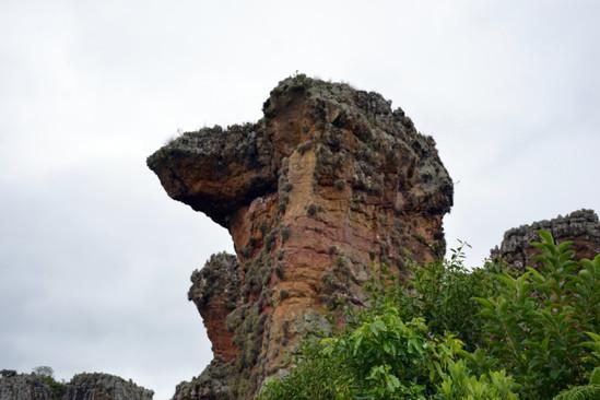 Parque estadual Vila Velha, Camelo