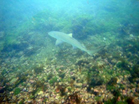 Tubarão na Sueste
