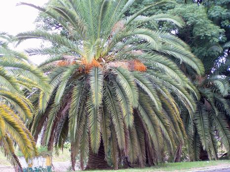 Av Ipiranga