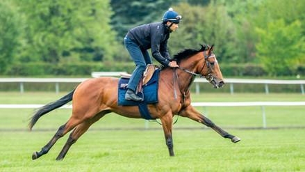 horse MLT 31 may 21.jpeg