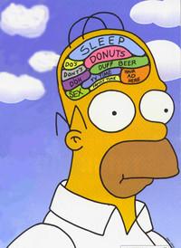 homers_brain-1