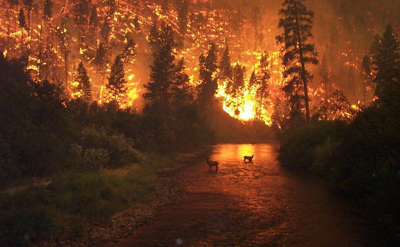 Deerfires