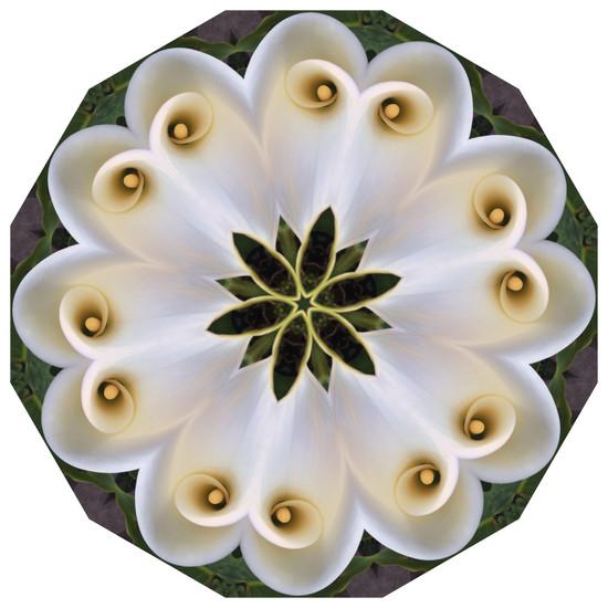 Daily Practice - Calla, Mandala 020619