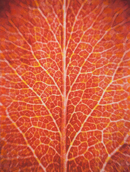 Red Leaf I, Consistency of Nature's Forms Series