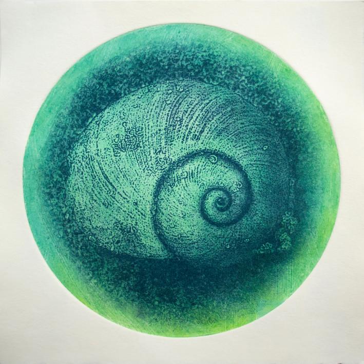 Nautilus, Rounds series