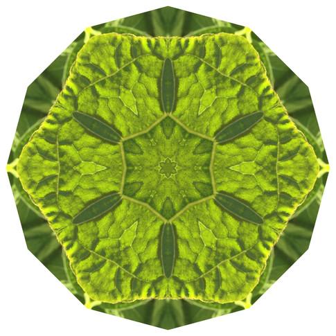 Daily Practice - Plant Intelligence, Mandala 051719