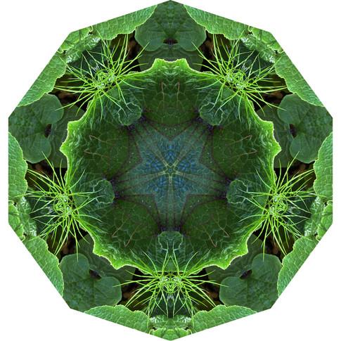 Pandemania Day 138 - Mixed Greens, Mandala 080120