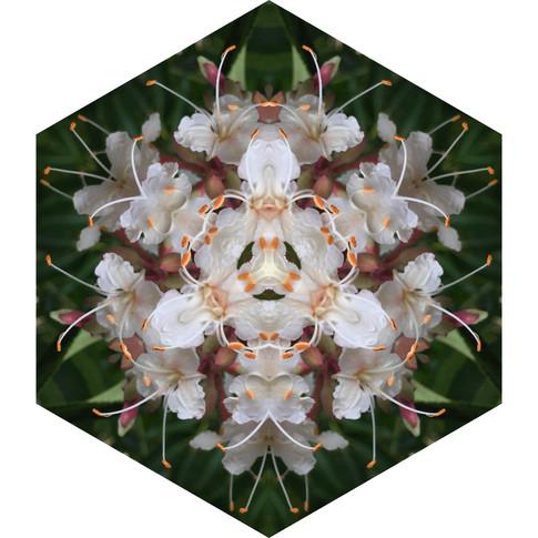 Pandemania Day 59 - Touch, Mandala 051420