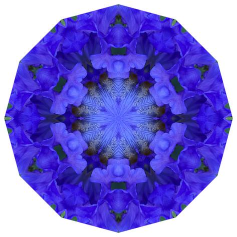 Daily Practice - Equinox Iris, Mandala 042119