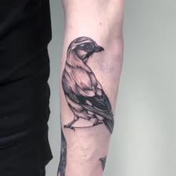 Dexter Kay Animal Tattoo