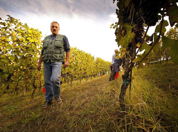 La Fusina the winemaker