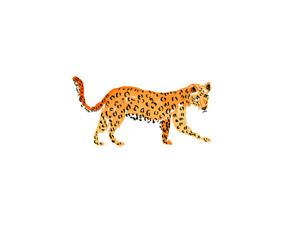 Striding Leopard by Jill Delavan