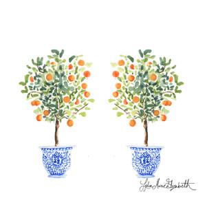 Twinning Orange Trees by Lydia Marie Elizabeth
