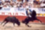 Hawk-bullfighting-for-frame-1.jpg