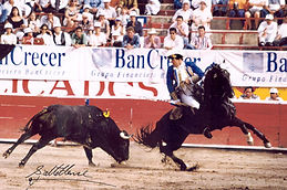 Hawk-bullfighting-for-frame-1.jpg