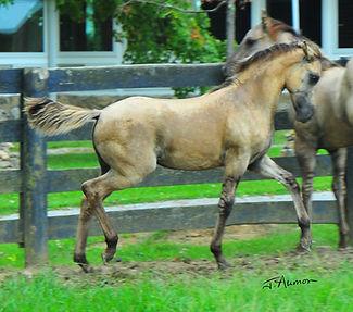 Coleta carousel horseSGN.jpg