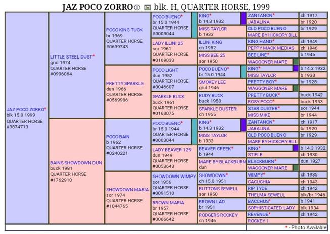 Jaz Poco Zorro Pedigree.jpg