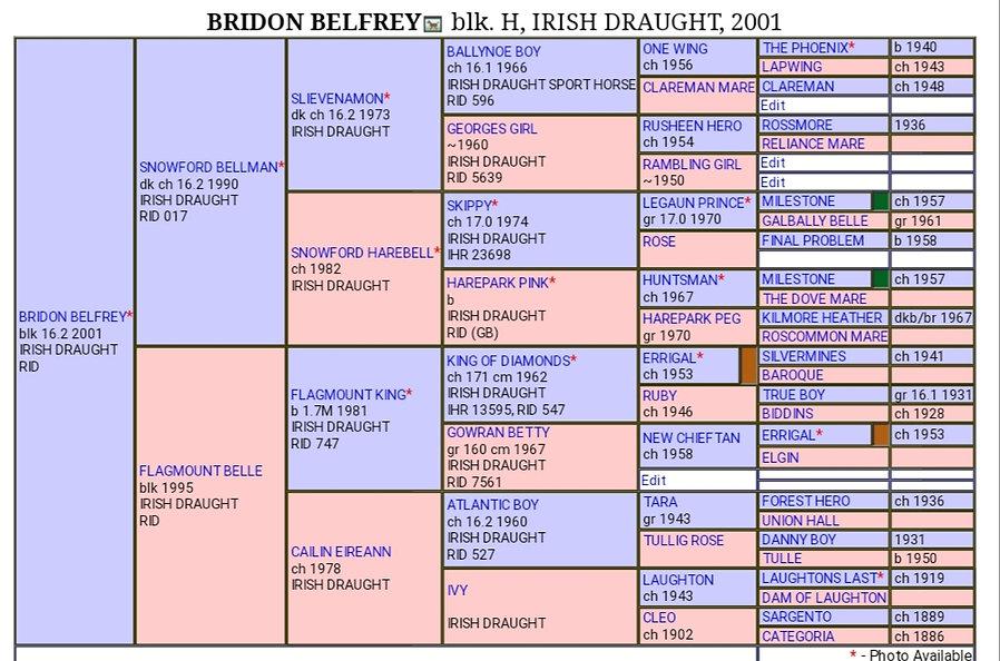 Belfrey pedigree.jpg