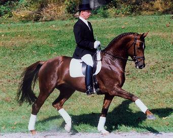 005-contucci-hanoverian-stallion-hilltop