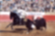 Hawk-bullfighting-2-orig-1.jpg