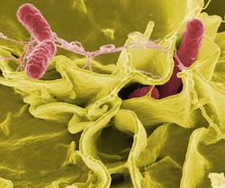 Lebensmittelmikrobiologie