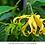 Thumbnail: karité ylang-ylang