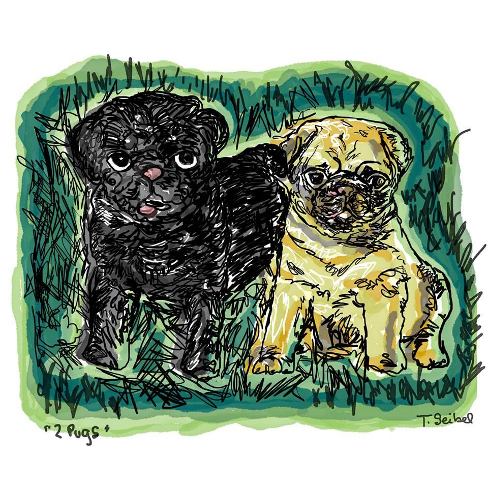 Two Pugs portrait