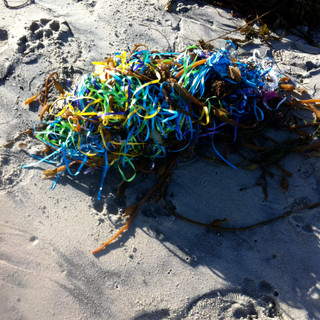 Balloon-seaweed-2013.JPG