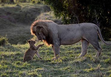 LionFatherandSonlores.jpeg