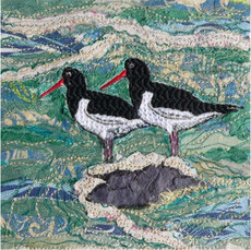 Oystercatchers Greetings Card by Chloe Morter Design