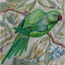 Parakeet Greetings Card by Chloe Morter Design