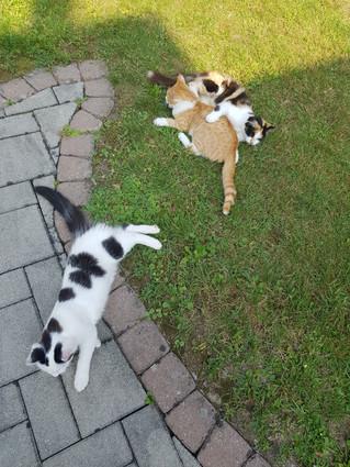 Spielende Katzen.jpg