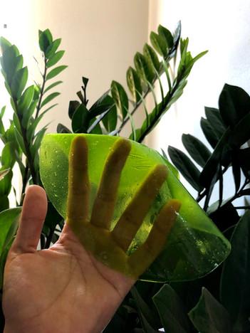 algae sustainable packaging